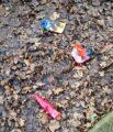 Foto vom Weg, Müll liegt zwischen Laub.