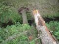 Der Baum war in zwei Teile zerbrochen.