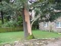 In den Nadelbaum an der Bahnhofstrasse fuhr der Blitz